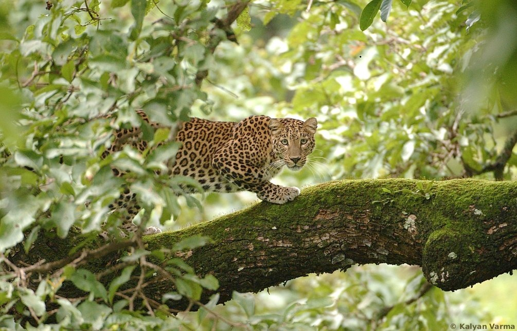 BR Hills wildlife sanctuary