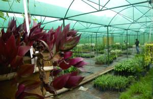 Sippighat Farm, Port Blair