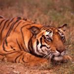 Maharashtra Wildlife