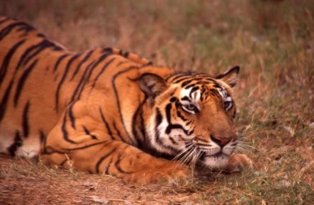 Mansinghdeo wildlife Sanctuary