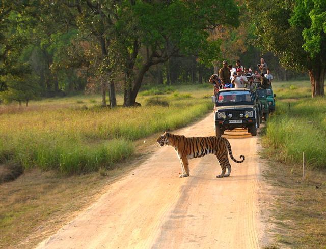 Madhya Pradesh – Kanha National Park