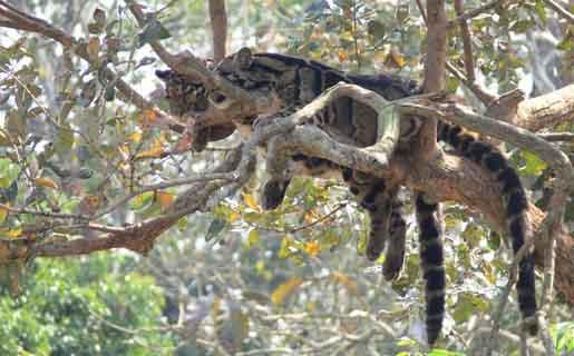 Mahananda Wildlife Sanctuary Tourmet