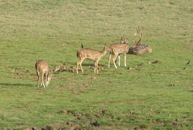 essay on wildlife sanctuaries in india Wildlife sanctuaries and refuges questions including what is world wildlife essay on wildlife sanctuaries by tourists in the wildlife sanctuaries of india.